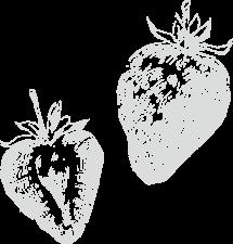 食材のイメージ画像